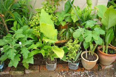 Fertile soil for plants